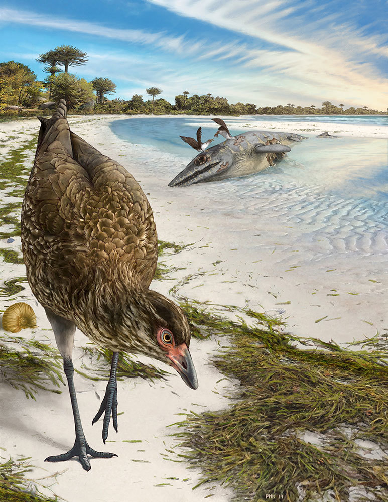 Fossils found two decades ago have turned up evidence of this early fowl