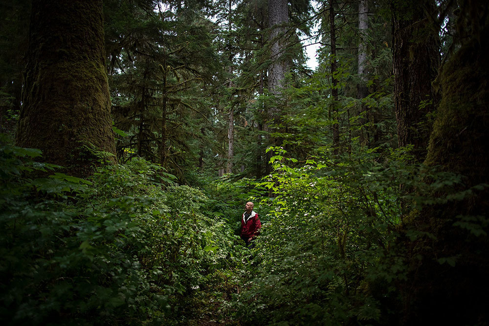 An old-growth forest in Alaska
