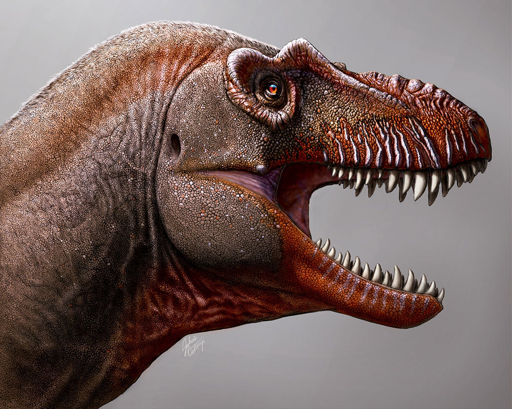 """An artist's rendering of the """"reaper of death,"""" the first new tyrannosaurid found in Canada in the past 50 years."""